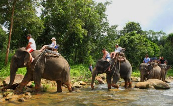 Elephant Trekking and Safari Adventures