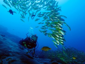 Dive the Similan Islands